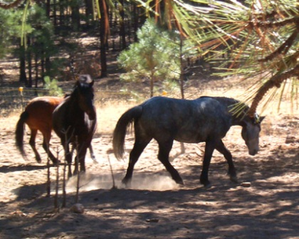 horseplay1.jpg